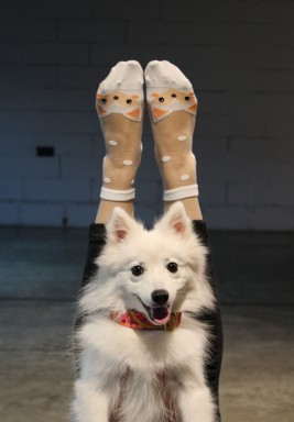 White Amy Fox Socks